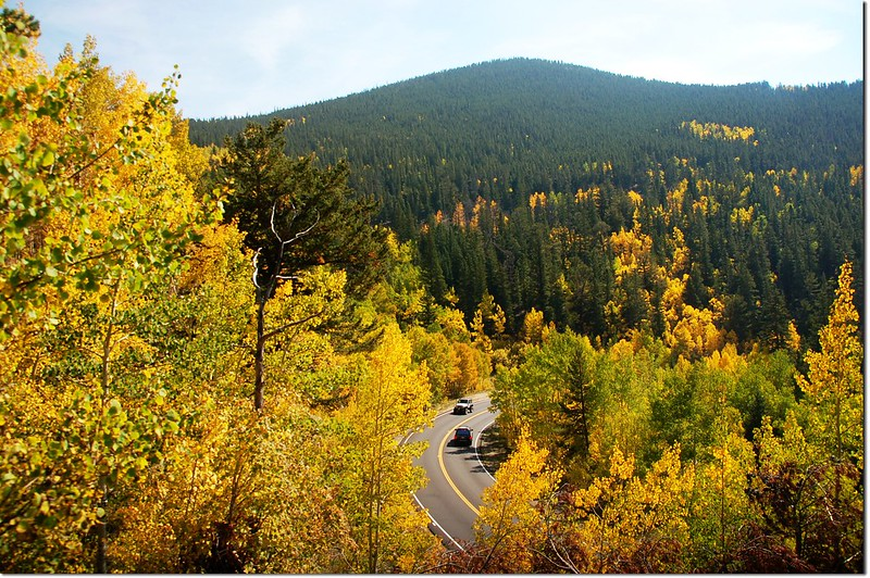 Aspen in Fall, Mount Evans Scenic Byway 2