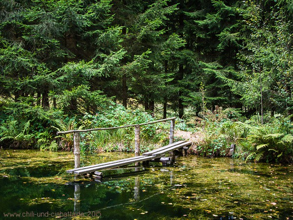 Kleiner Waldsee