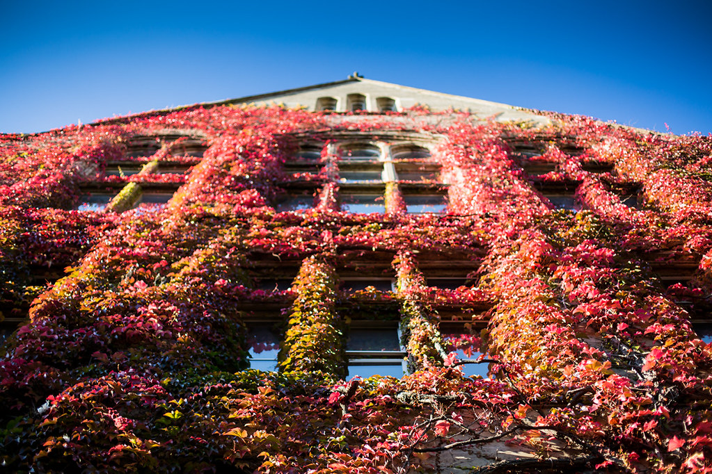 The weather in Manchester has been perfect this week. I was also treated to my first glimpse of the University's Beyer building in all its stunning autumn glory.