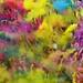 color run powder, holi gulal powder by colourpowderau