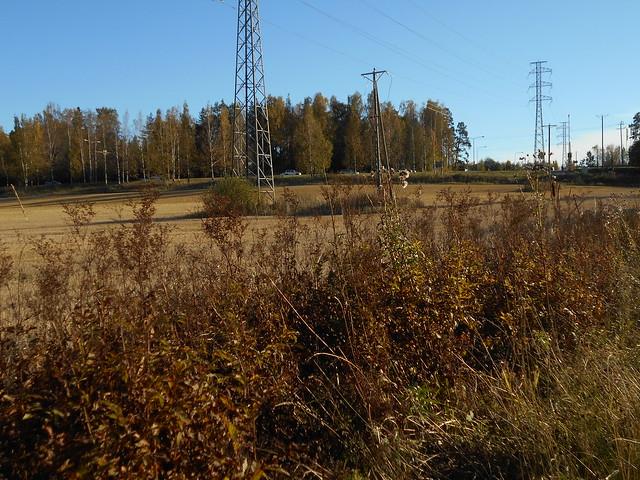 Niittynäkymiä syksyllä; mesiangervot yöpakkasten tultua 7.10.2015 Espoo Leppäsilta