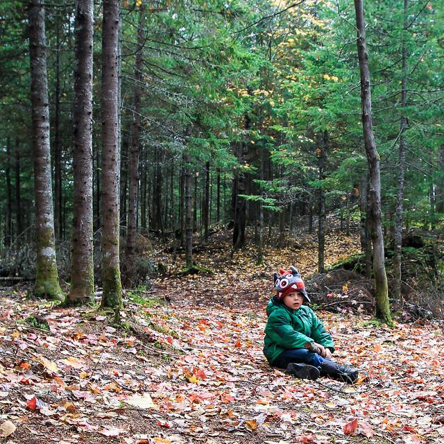 Manu dans la forêt