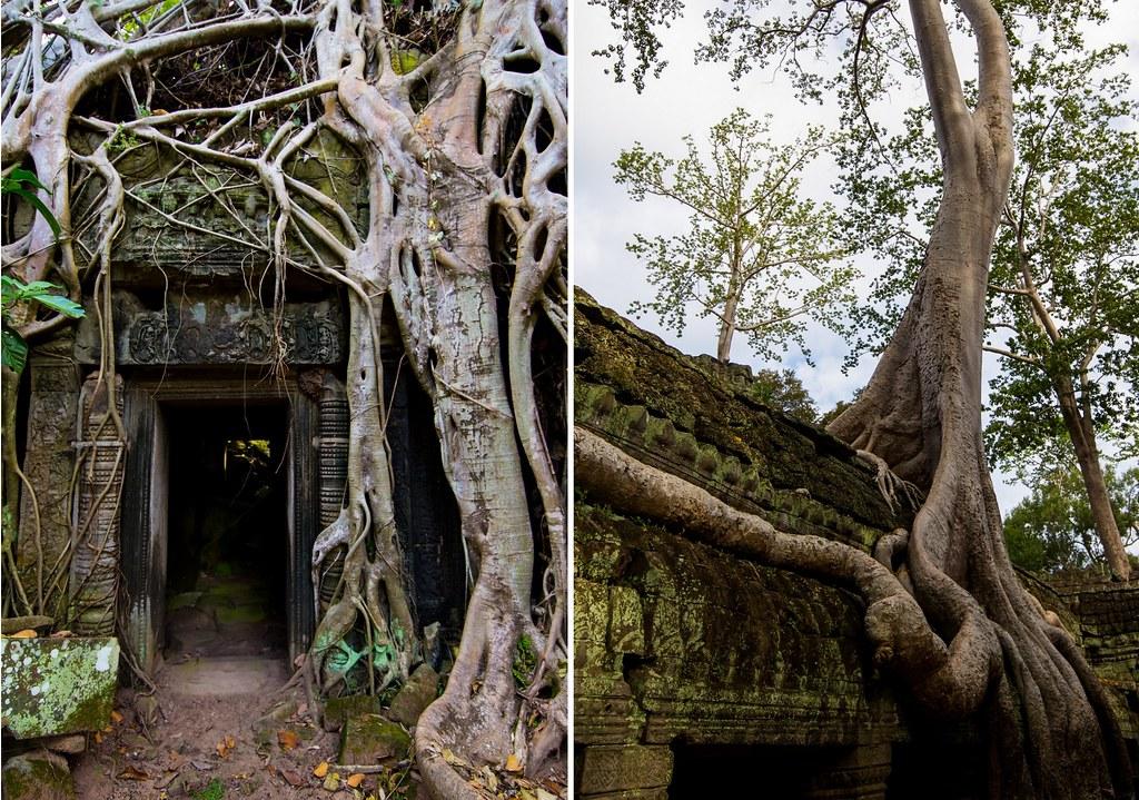 Angkor - Ta Prohm6