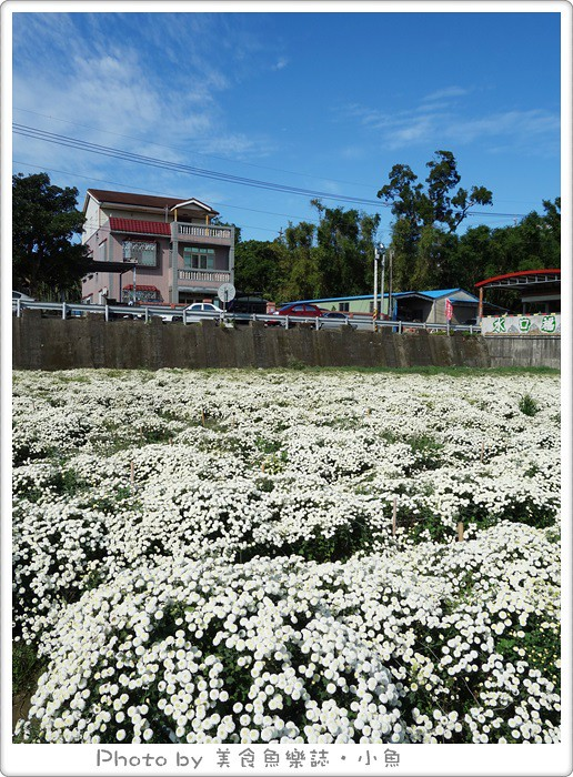 【苗栗銅鑼】2015苗栗銅鑼杭菊季‧讓我們一起賞花去!! @魚樂分享誌