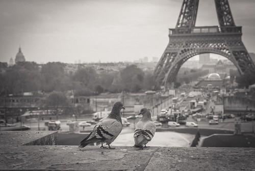Paris 13 11