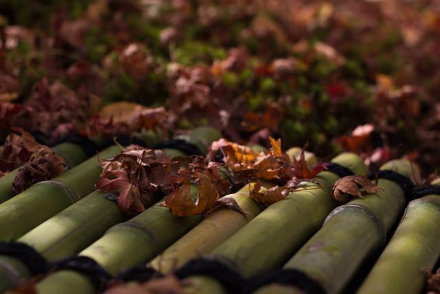 地面に落葉したモミジの葉