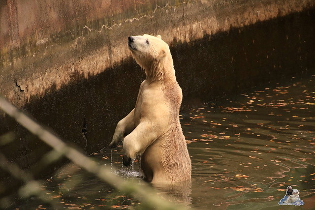 Tierpark Berlin 07.11.2015  0103