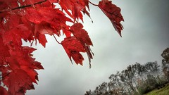 it is a damp, drizzly November of the soul.