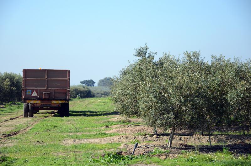Lagar do Marmelo, Oliveira da Serra