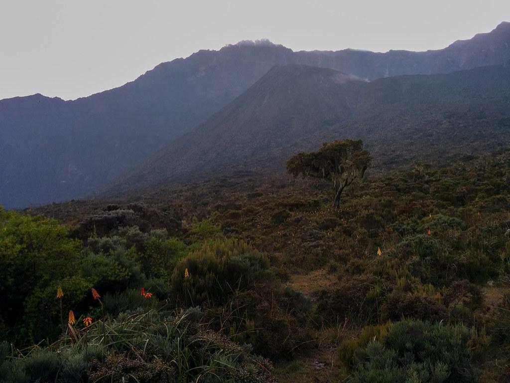 Aufstieg zur Mirakamba Hütte - 1. Tag Mount Meru Tour zur Akklimatisierung. Tansania - Kilimanjaro Kraterschläfer Expedition 2016, Wikinger Reisen