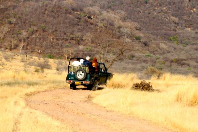 Safari in Ranthambore National Park, India