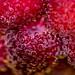 Bubbly Berries - DSC_0437 by Kerstin Winters