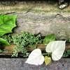 Gutter Growth #drain #gutter #plant #weed #flora #Guyana