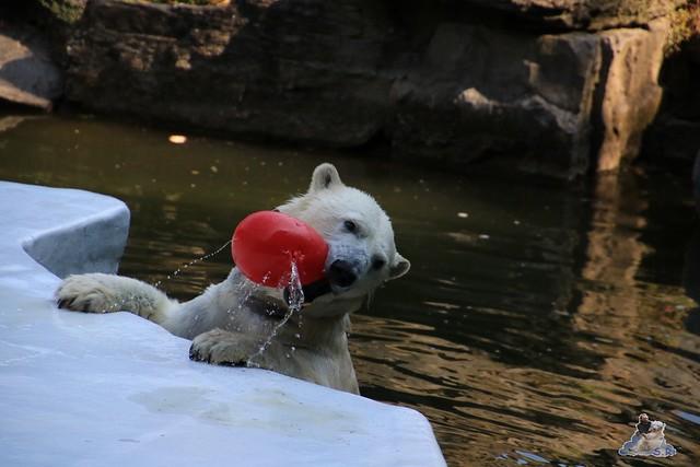 Tierpark Berlin 23.08.2015  063