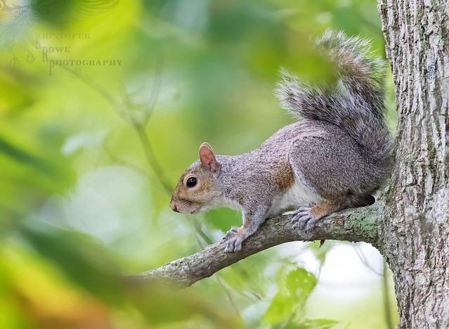 Squirrel ISO 12.8K 9_29
