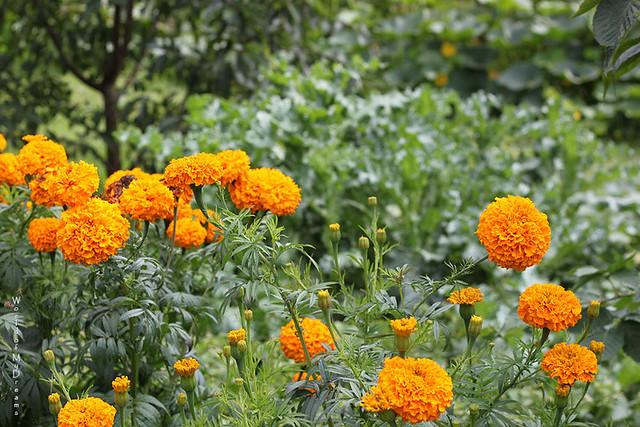 Countryside colours. Autumn