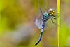 Dragonfly by RichardJames1990