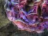 Hydrangea by sbox