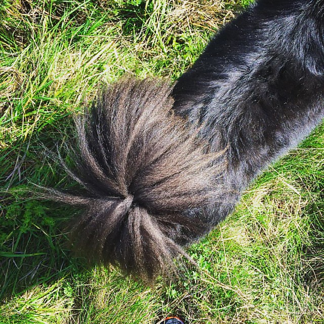 Obsessed with Bear Cub's tail. 💚