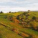 Rolling Hills in Autumn - Landscape in Stuttgart, Germany by Batikart