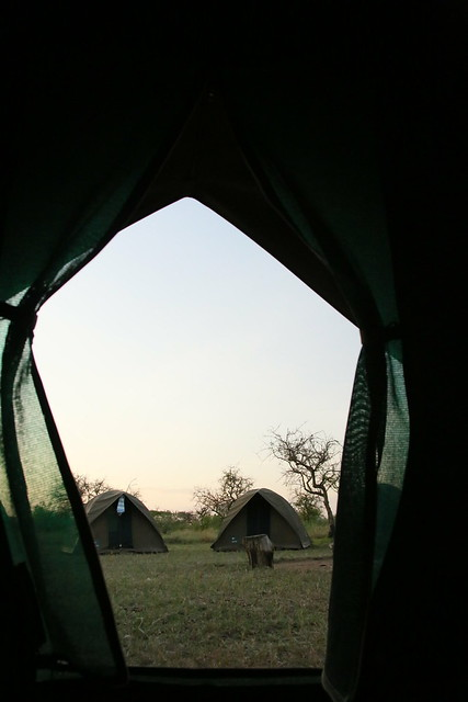 Morning tent view.