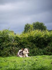 Norman countryland - Photo of Lison