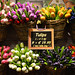 Tulips galore by angelsgermain