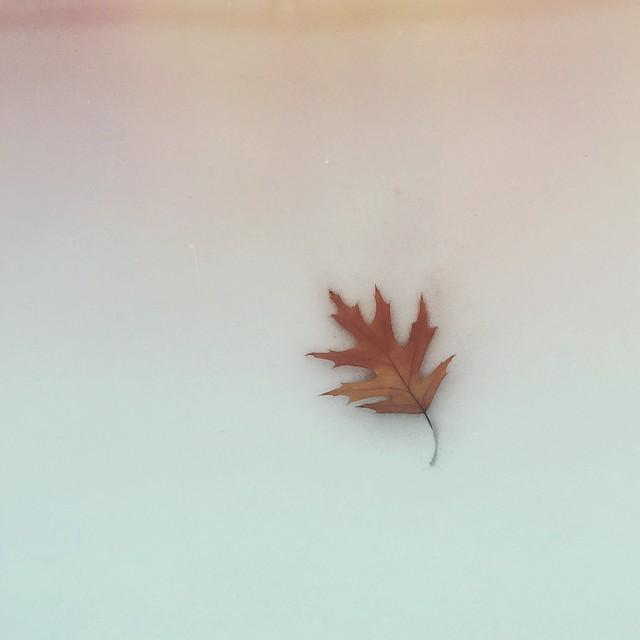 Goodbye Fall. Hello Winter