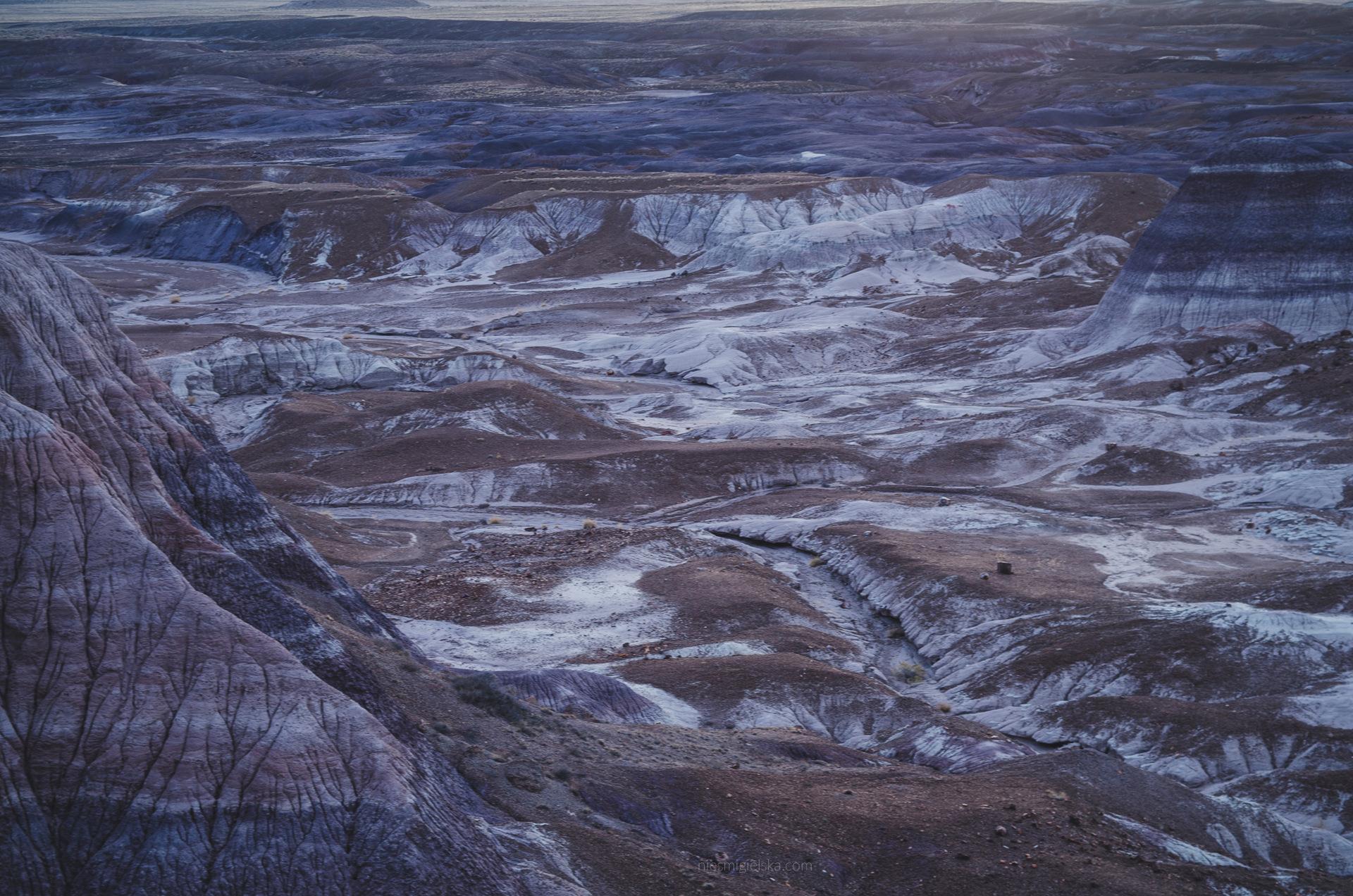 skamieniały las usa