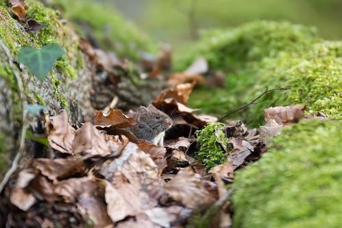 Le petit habitant des bois