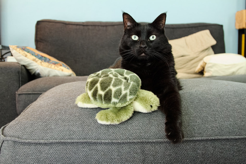 Our black cat Emma with her beloved stuffed turtle
