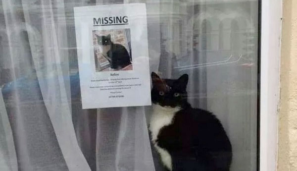 missing-cat-with-missing-cat-poster