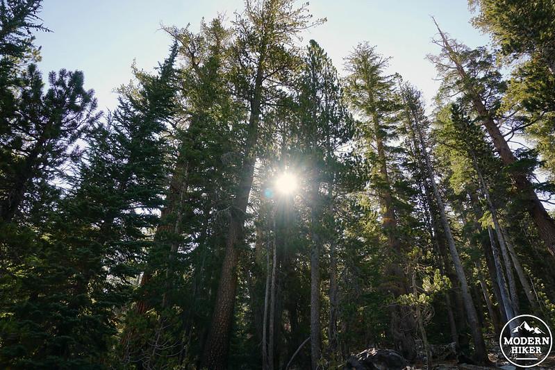DuckPass04 - Sunlit Trees