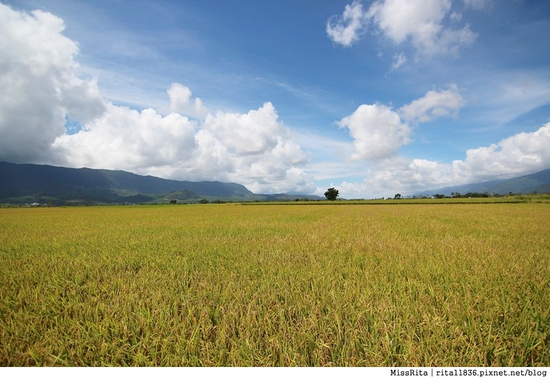 《遊記》台東池上‧造訪「米的故鄉」,金黃飽滿的稻田隨風搖曳,在伯朗大道尋找金城武的蹤影★