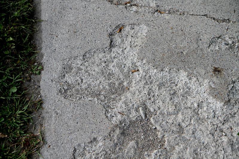 sidewalk bunny