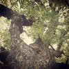 Usual click.... #myclick  #nature #tree #followback