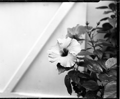 First shots with the Graflex