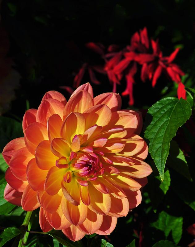 Flower Garden Walk (10)