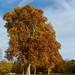 OK's Pics hat ein Foto gepostet:Herbstimpression