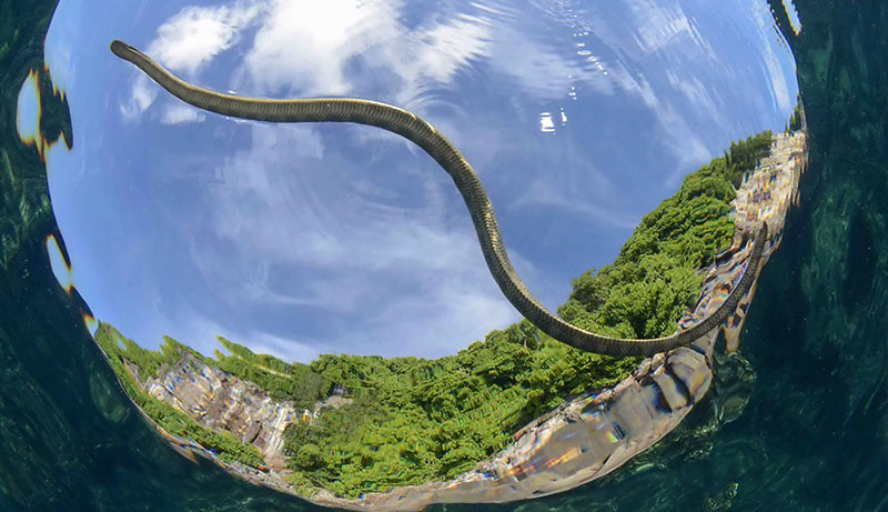 snake-island-emoceanliveaboards-by-unknown