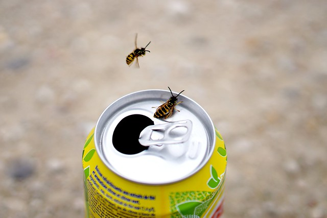 Flirting wasps