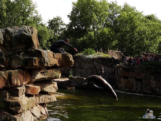 Zoo Berlin 28.08.2015  043