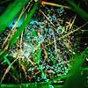 Dew/rain drops on spider webs, morning, Washington County State Recreation Area. #ondragontime #southernillinois #soill #618 #nashvilleil #washingtoncountystatepark #statepark #ilstatepark