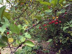 mystery tree IMG_3155