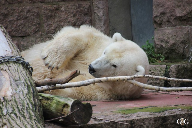 Zoo Rostock 19.09.2015189