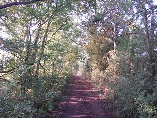 Charity Lane (Track)