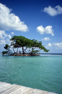 Obrázek The Split. belize mangrove cayecaulker thesplit