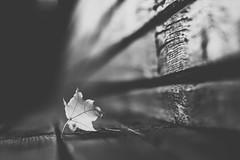 Alone   Autumn 2015 #281/365