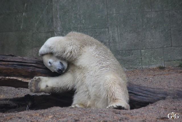 Besuch Zoo Rostock 17.10.2015123