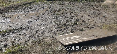 稲刈り・脱穀、稲刈り後の田
